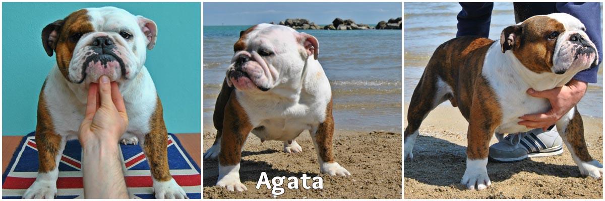 Agata_low