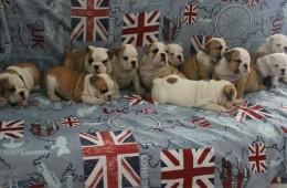 Marlon Brandon X Luise : 5 cuccioli disponibili