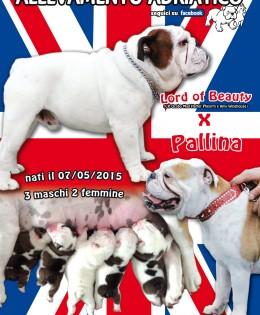 Lord of Beauty X Pallina : cucciolata del 7.5.2015